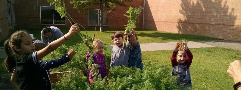 Lincoln Elementary School Garden-Bemidji 2018